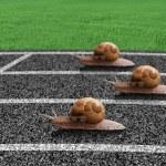 Snails race on sports track — Stock Photo #9956339