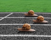 Snails race on sports track — Stock Photo