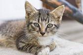 Lindo gatito atigrado — Foto de Stock