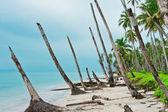 Issız bir ada kıyı şeridinde tsunami, banyak adalar sonra — Stok fotoğraf
