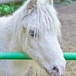retrato de cavalo branco — Foto Stock