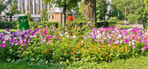 Landscaped flower bed — Stock Photo