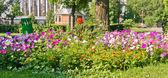 Aangelegde bloem bed — Stockfoto