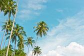 Palmas sobre fondo de cielo, archipiélago banyak — Foto de Stock