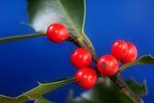 Aquifolium — Stock Photo