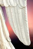 Angel wing — Stock Photo