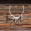 Antler on a wall — Stock Photo
