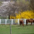 Horses in the farm — Stock Photo