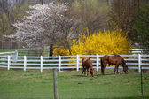 Horses in the farm — Stockfoto
