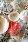 Different type of shells — Stock Photo