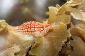 Small beautiful fish — Stock Photo