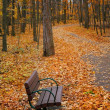 Bench in a park — Stock Photo #8081228