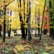 Stock Photo: AUTUMN TIME TREES