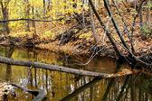 Autumn Trees Abstract — Stock Photo