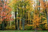 秋の時間の木 — ストック写真