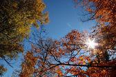 Bright autumn time — Stock Photo