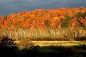 Autumn Time — Stock Photo