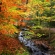 Stockfoto: Autumn time