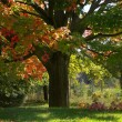 Autumn Tree — Stock Photo #8098216