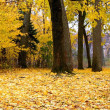 Yellow Colored Trees — Stock Photo #8098276