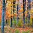 Autumn Landscape — Stock Photo #8098479