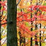 Tall Autumn Trees — Stock Photo #8098551