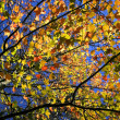 Autumn Scene — Stock Photo #8098563
