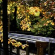 图库照片: Board Walk In Autumn