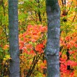 Tall Autumn Trees — Stock Photo #8098660