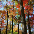 Tall Colorful Trees — Stock Photo