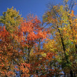 Autumn Scene — Stock Photo #8099217