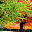 colorful trees — Stock Photo