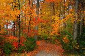Scenic Autumn — Stock Photo