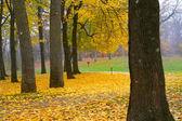 падение деревьев — Стоковое фото