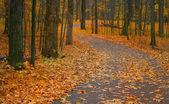 Sonbahar yol — Stok fotoğraf