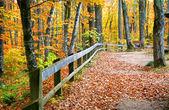 Güzel sonbahar yürüme yolu — Stok fotoğraf