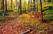 árboles de otoño — Foto de Stock