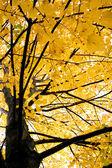 Arbre automne coloré — Photo