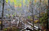 Desmatamento — Fotografia Stock