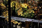 Pé de placa no outono — Fotografia Stock