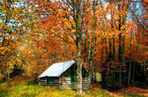 Scène automne — Photo