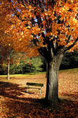 Red Autumn Tree — Stockfoto
