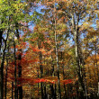 Autumn Banner — Stock Photo #8145534