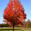 Stock Photo: Red Color Tree