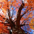 colorful tree — Stock Photo