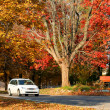 Stock Photo: Autumn time in Michigan
