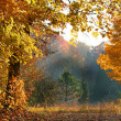 Foggy Autumn Morning - Stock Photo