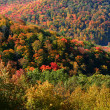 colorful autumn landscape — Stock Photo