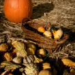 Harvest — Stock Photo #8146424