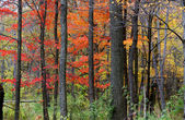 Barevné stromy — Stock fotografie